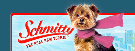 ... Yorkshire Terrier: SCHMITTY - THE REAL NEW YORKIE - YORKSHIRE TERRIER Yorkshire Terrier 911