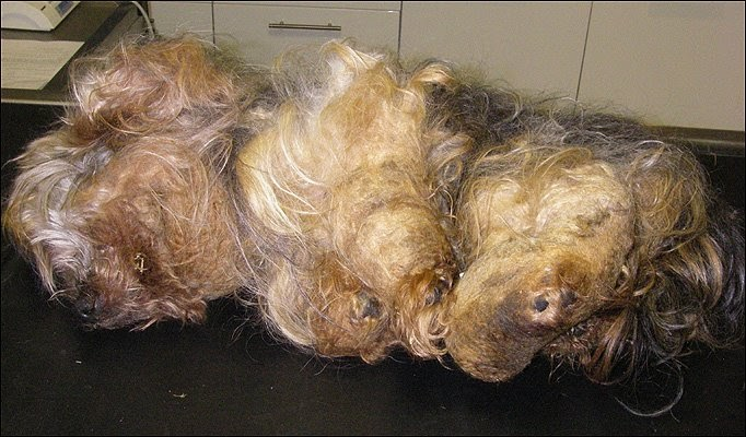 Dog Grooming Supplies Wholesale Calgary