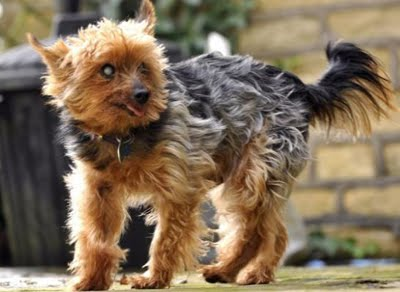 Halifax Small Dogs For Sale