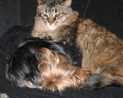 Lisa Vanderpump Dog Breed