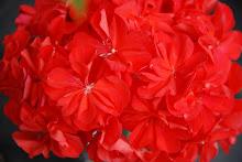 Röd Herrgård
