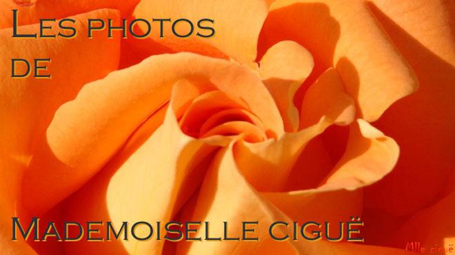 Les photos de Mademoiselle ciguë