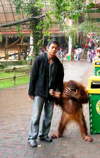 Kekompakan Monyet dengan Anda