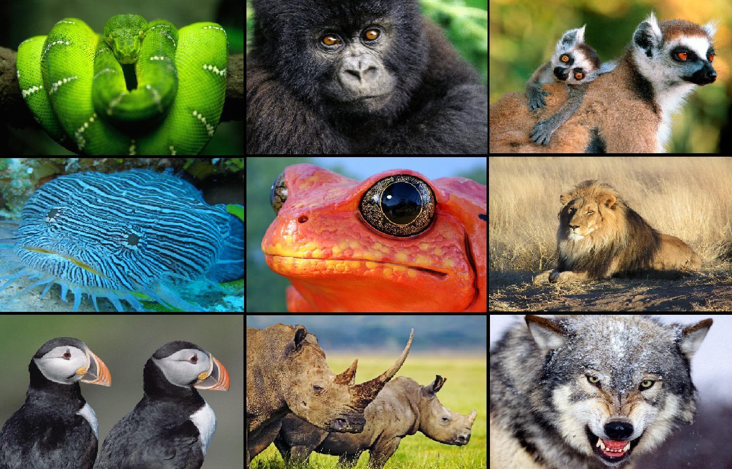 [Animals+Pack+1+(49).jpg]