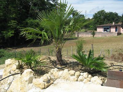 C 39 est pas facile cours de p pini risme for Decoration jardin palmier