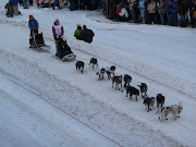 38th Iditarod ceremonial start in Anchorage 2010