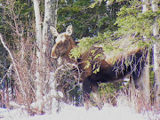 Moose back of house