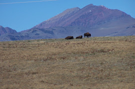 Eastern front buffalo