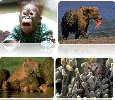 Read more on Materi biologi smp kelas vii semester i preceptorial .