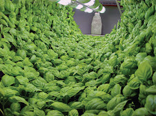 tunnel of basil