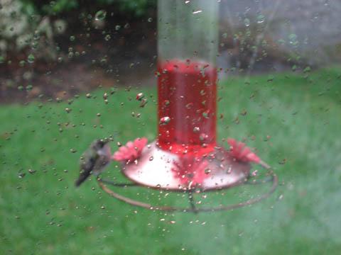 [hummingbird]