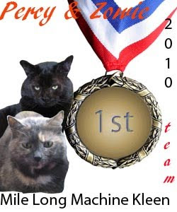 Our Cat-O-Lympics Medal