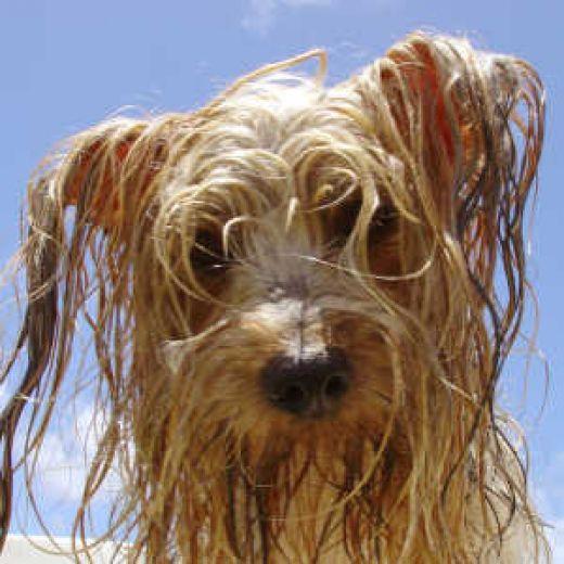 [Wet+dog]