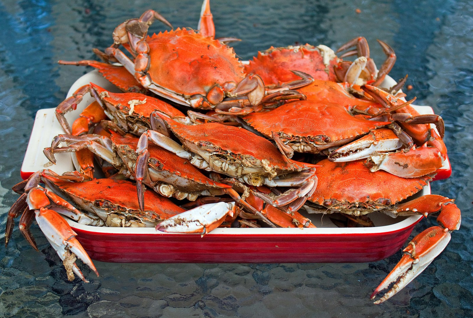 ... crabs, ontario king crabs for sale :: ~red and black crabs found in