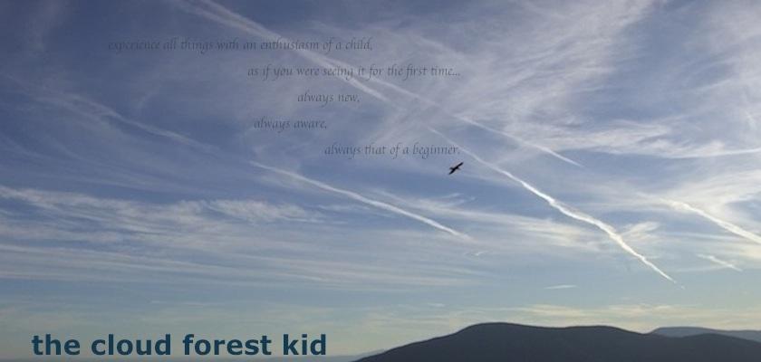 cloudforestkid