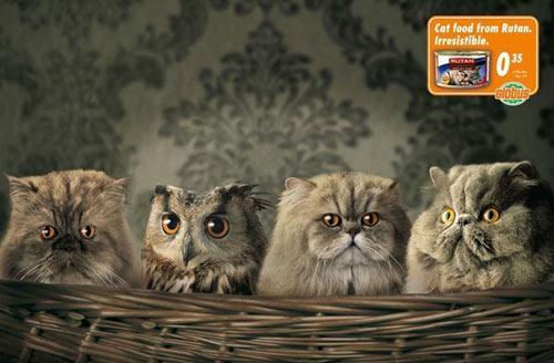Rutan cat food advertisement