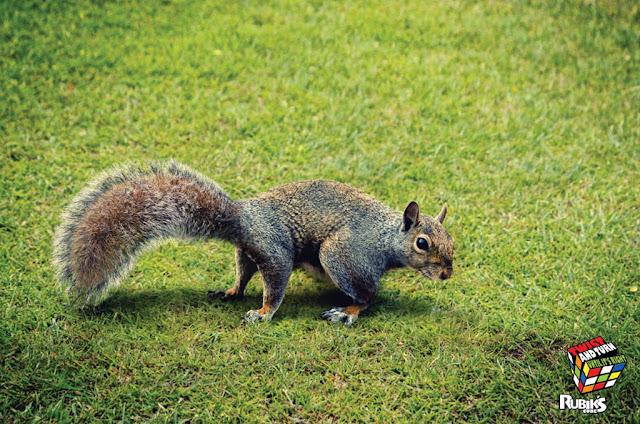 Rubik's cube ad - squirrel
