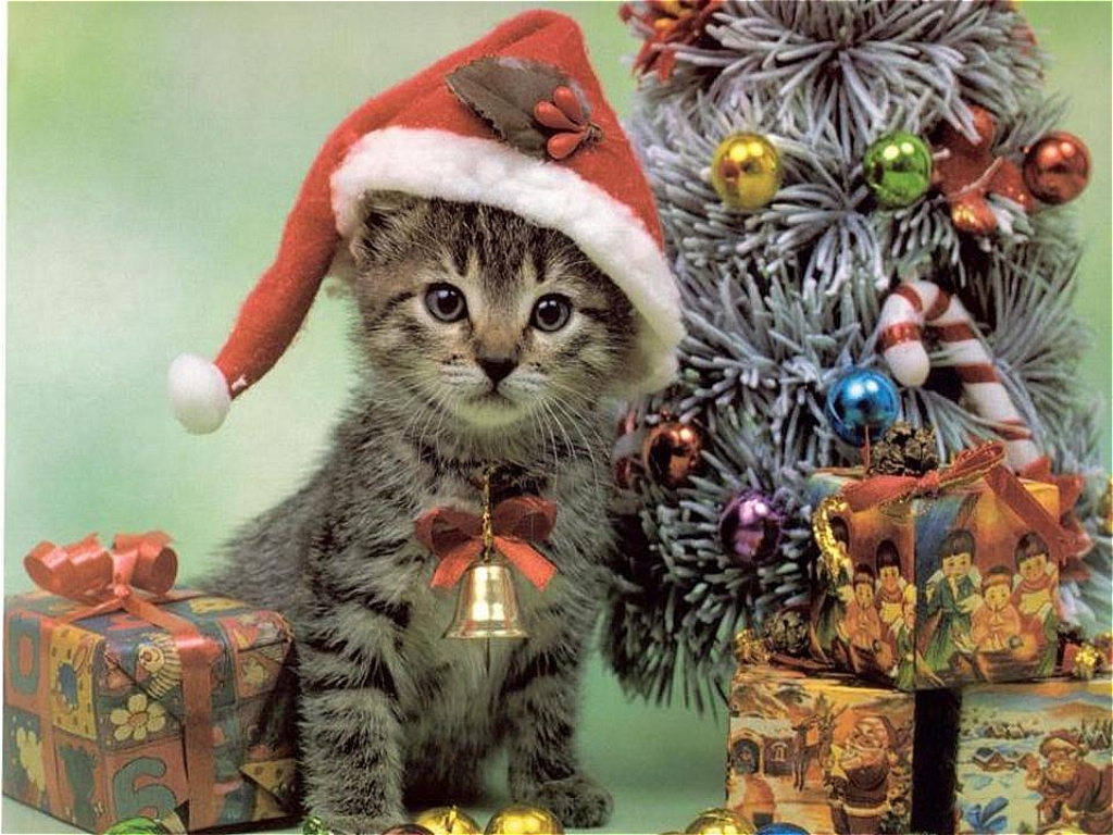 Animals and christmas animal space for Christmas pictures of baby animals
