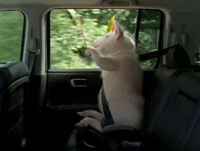 Piggy Geico commercial