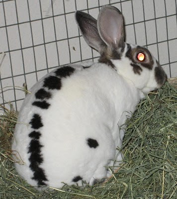 When you look at the rabbit, the rabbit looks back at you