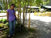 bambu kuning...