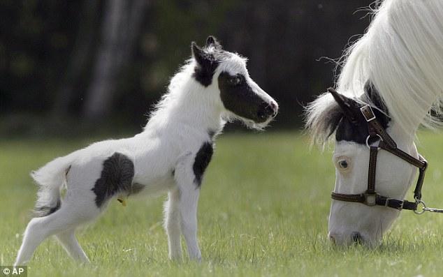 Anak Kuda Unik