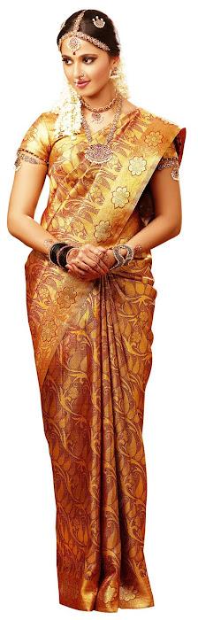 anuska in chennai silks ad actress pics