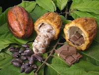 Cacaoyer-Cacao