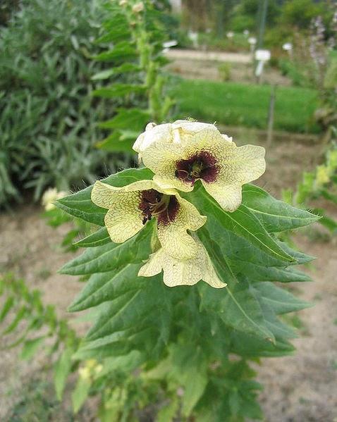 Liste des plantes medicinales se soigner par les plantes j phytotherapie homeopathie medecine - Liste des plantes medicinales ...