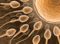 augmenter le nombre de spermatozoides