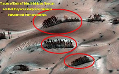 'Artificial Wooden Plank' Found On Mars Mars-trees