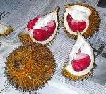 Kalimantan Red Durian