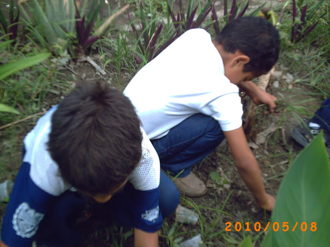 Limpiando el huerto
