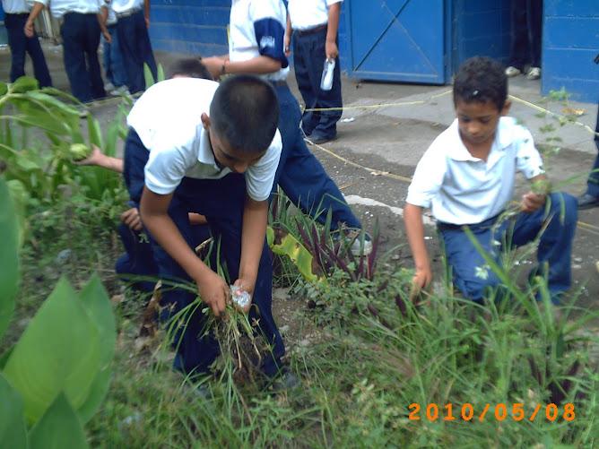 """Estudiantees de tercero """"D"""" limpiando su huerto"""