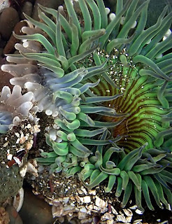 scale worm and sea star relationship