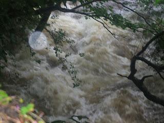 shimna river coursework