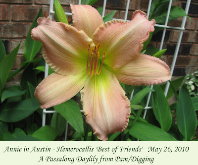 Annieinaustin, Best of Friends daylily shade