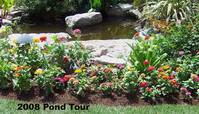 Annieinaustin, pond 7 zinnias of 2008