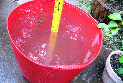Annieinaustin,12 inches rain in tub