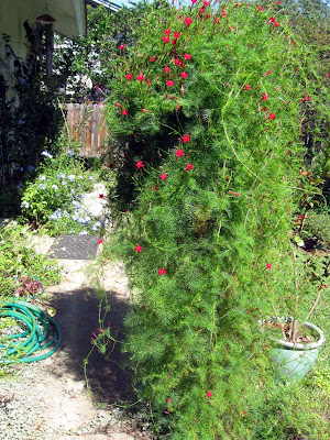 annieinaustin, cypress vine blocks walk