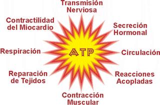catabolico anabolico definicion