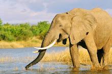 ellie ~ lake kariba ~ zimbabwe