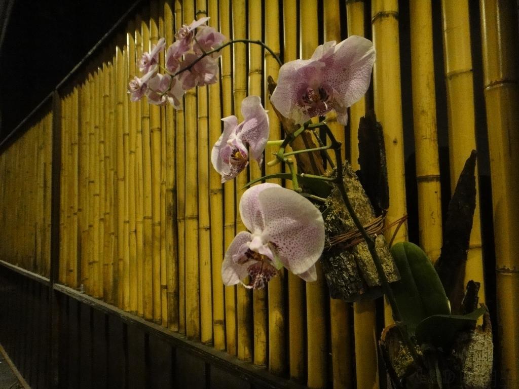eternal orchids