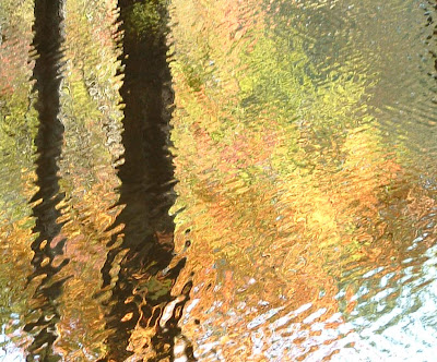 abstract fall leaves water reflection