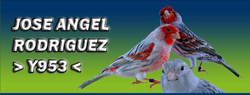 José Ángel Y953