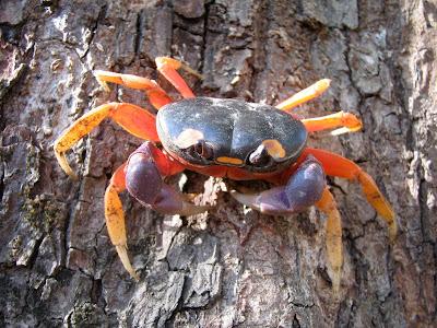 amazing-crab-3