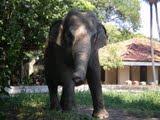 Toda Mônica tem o seu elefante!