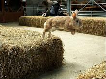 Kaninchen brauchen Auslauf