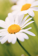 "Look for ""Today's Daisy"" at the end of every post."