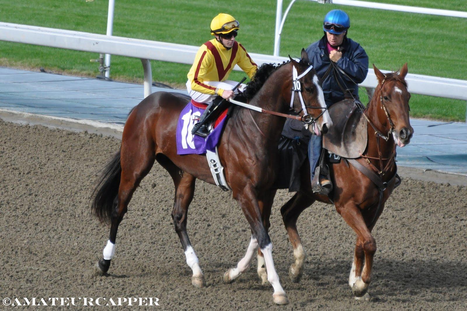 ZENYATTA HOLLYWOOD PARK LADY/'S SECRET 19th LAST CAREER WIN HORSE RACING PROGRAM
